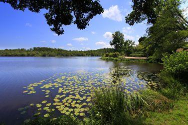 Lac de Mimizan Aureilhan - Etang - Faune - Flore - Nature - Tranquilité - Calme - Eau - Réserve naturelle - activités nautiques - activités nature - golf - pêche