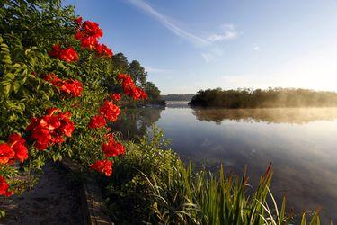 Lac de Mimizan Aureilhan - Promenade fleurie - Etang - Faune - Flore - Nature - Tranquilité - Calme - Eau - Réserve naturelle - activités nautiques - activités nature - pêche - sentier - promenade - flurs - arbustes - plantes