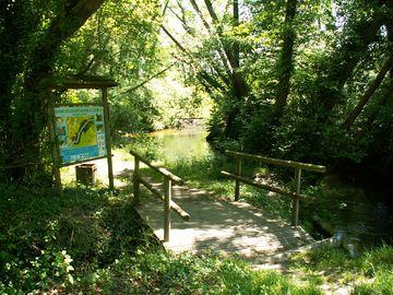 Sentier de découverte nature du Courlis - Mézos - Forêt - Randonnée pédestre - Mimizan