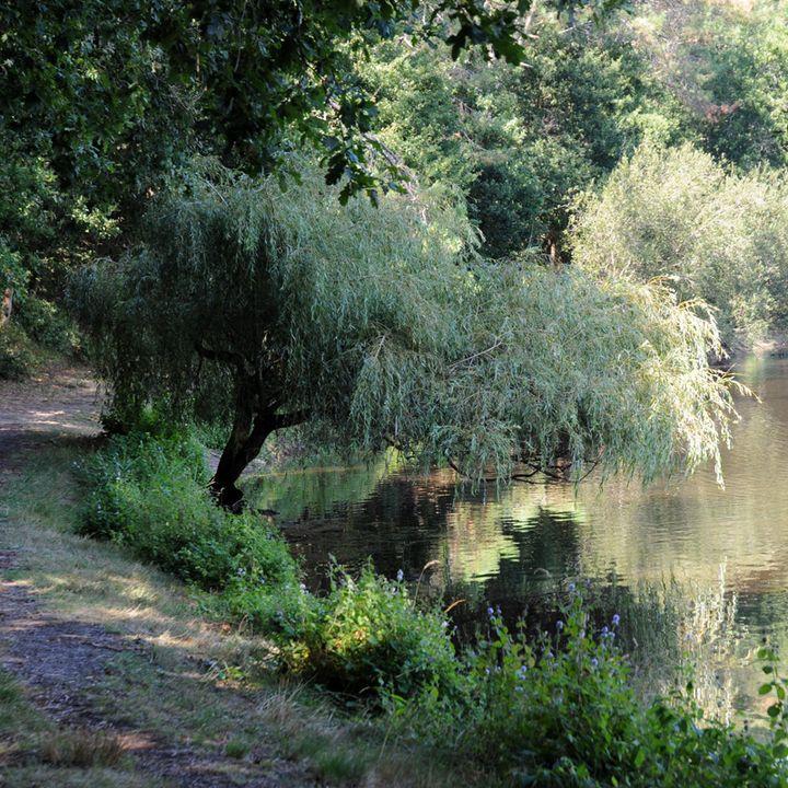 L'étang du Bourg-vieux à Bias proche de Mimizan