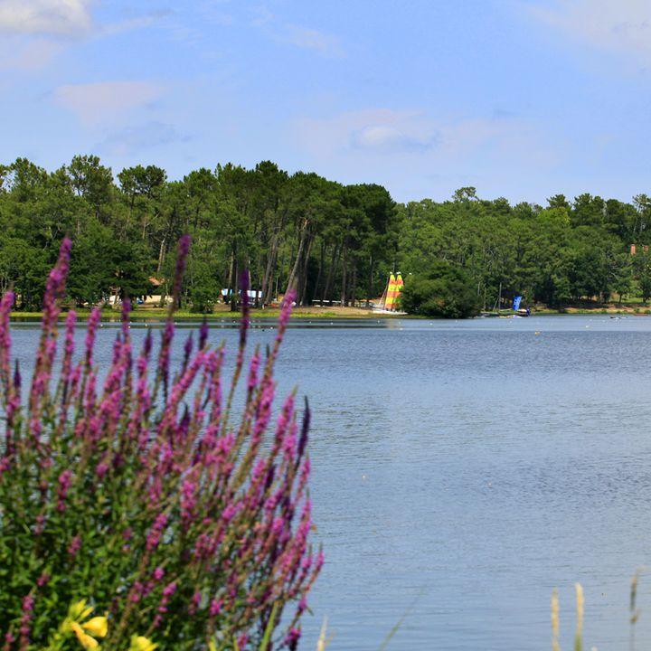 Lac de Mimizan Aureilhan - Sentiers - promenade fleurie - bovins - oiseaux - Pêche - Etang - A pied - A vélo - Zones humides - Faune - Flore - Promenade - visites - Réserve naturelle - activités nautiques - nature - patrimoine