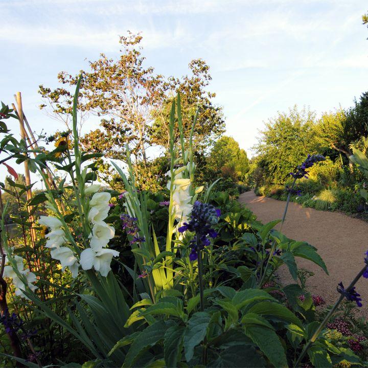 Promenade fleurie - Mimizan - plantes - arbuste - visite - faune - flore - lac - réserve naturelle - fleurs - environnement -