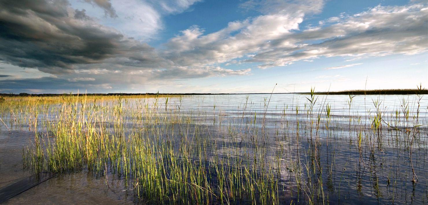 Le lac ou étang d'Aureilhan - Mimizan - pêche - chasse - pirogue - canoë - voile - stand up
