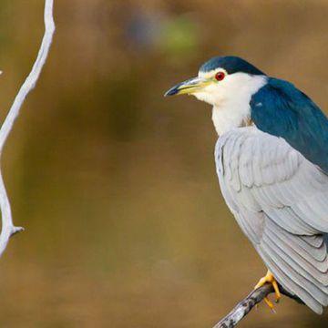Réserve Ornithologique du Teich  à LE TEICH