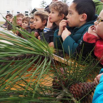 La Forêt des Landes et sa gestion durable à AUREILHAN