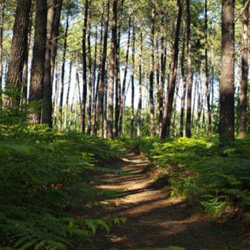 """Sentier de découverte """"le Courant des Forges""""  à MIMIZAN"""