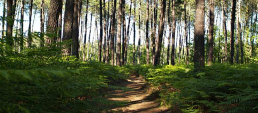 """Sentier de découverte """"le Courant des Forges"""" à MIMIZAN (40)"""