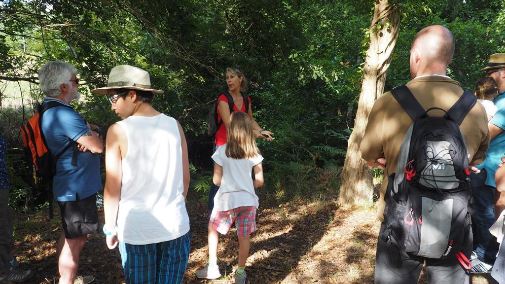 Promenade nature en forêt sur l'histoire et la gestion de la forêt Landaise