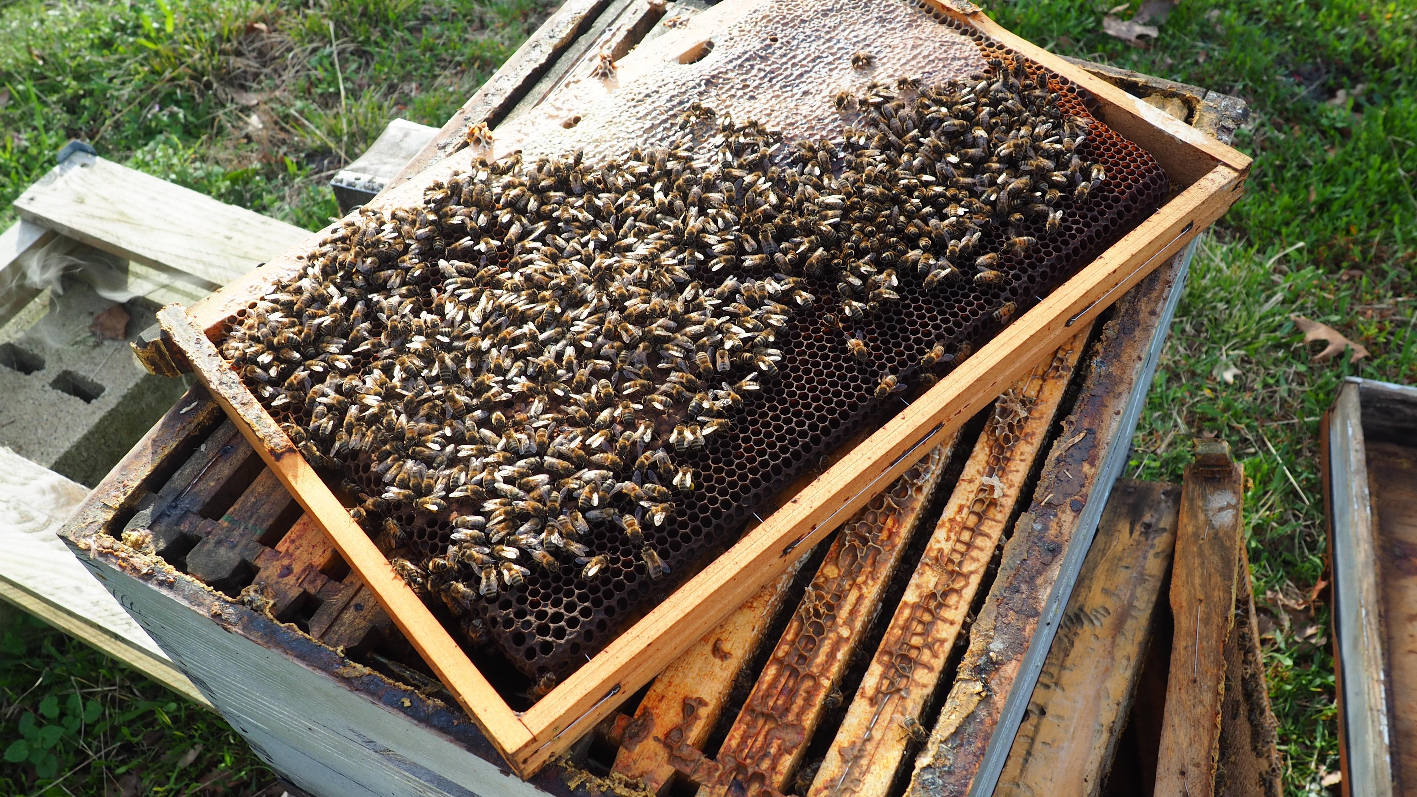 Chasse aux trésors et découverte d'une ruche et de sa colonie d'abeilles avec une apicultrice