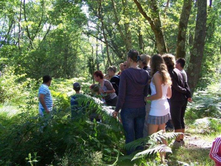 Balade nature en forêt Landaise