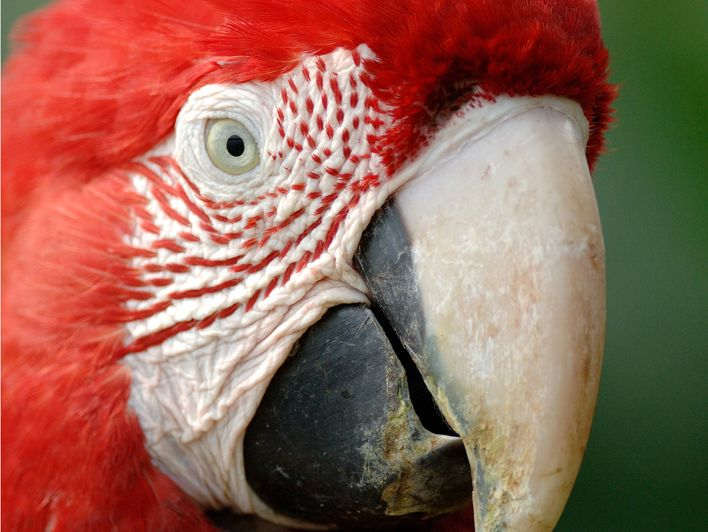 Festival international du film et de la photographie animaliers et de nature